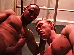 Bulldog Pit gay hunks being fucked